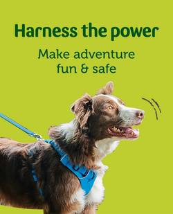 Dog Collars Leads Dog Harnesses Tags Pets At Home