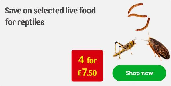 Livefood For Reptiles Mealworms Crickets Pets At Home