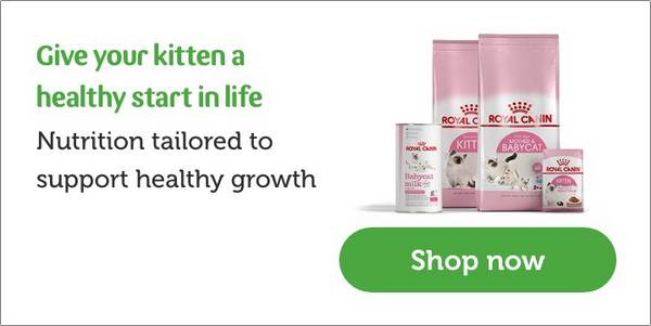 Kitten Food Nutritious Healthy Food Pets At Home