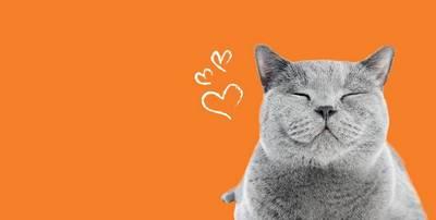 https://i1.adis.ws/i/petsathome/dept-cate-header-img-Cat-header?w=400&