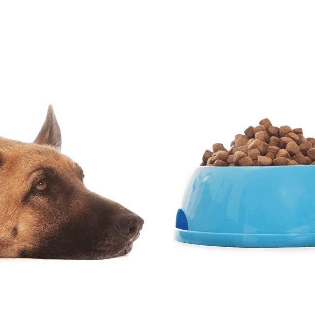 Dog Food Treats Nutrition Feeding Pets At Home