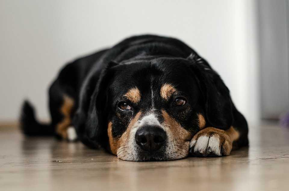 Puppy sickness symptoms