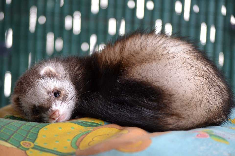 My First Pet Ferret My First Pet Pet Talk