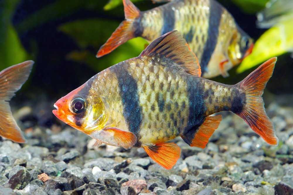 Cold Water Fish Advice Types Of Fish Fish Care Pet Talk