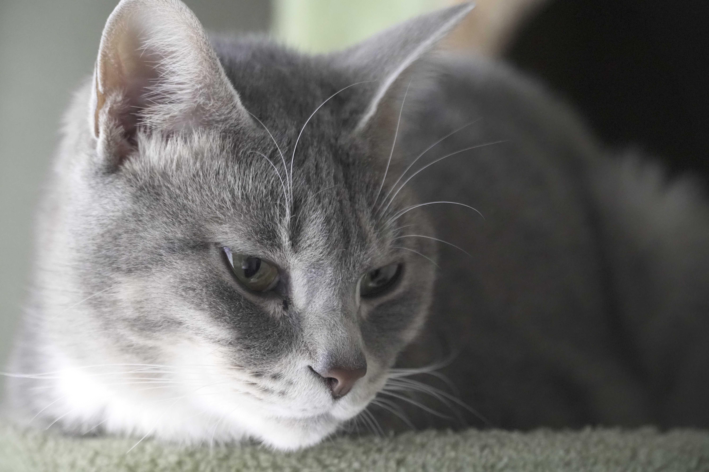 Understanding Cat Neutering & Castration | Pets At Home