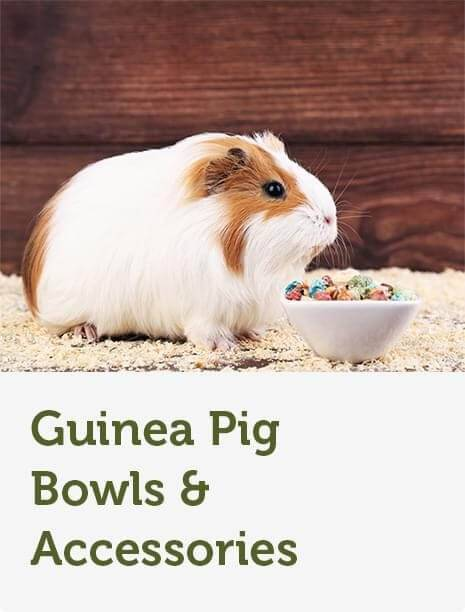 Guinea Pig Supplies | Food, Hutches & Toys | Pets at Home