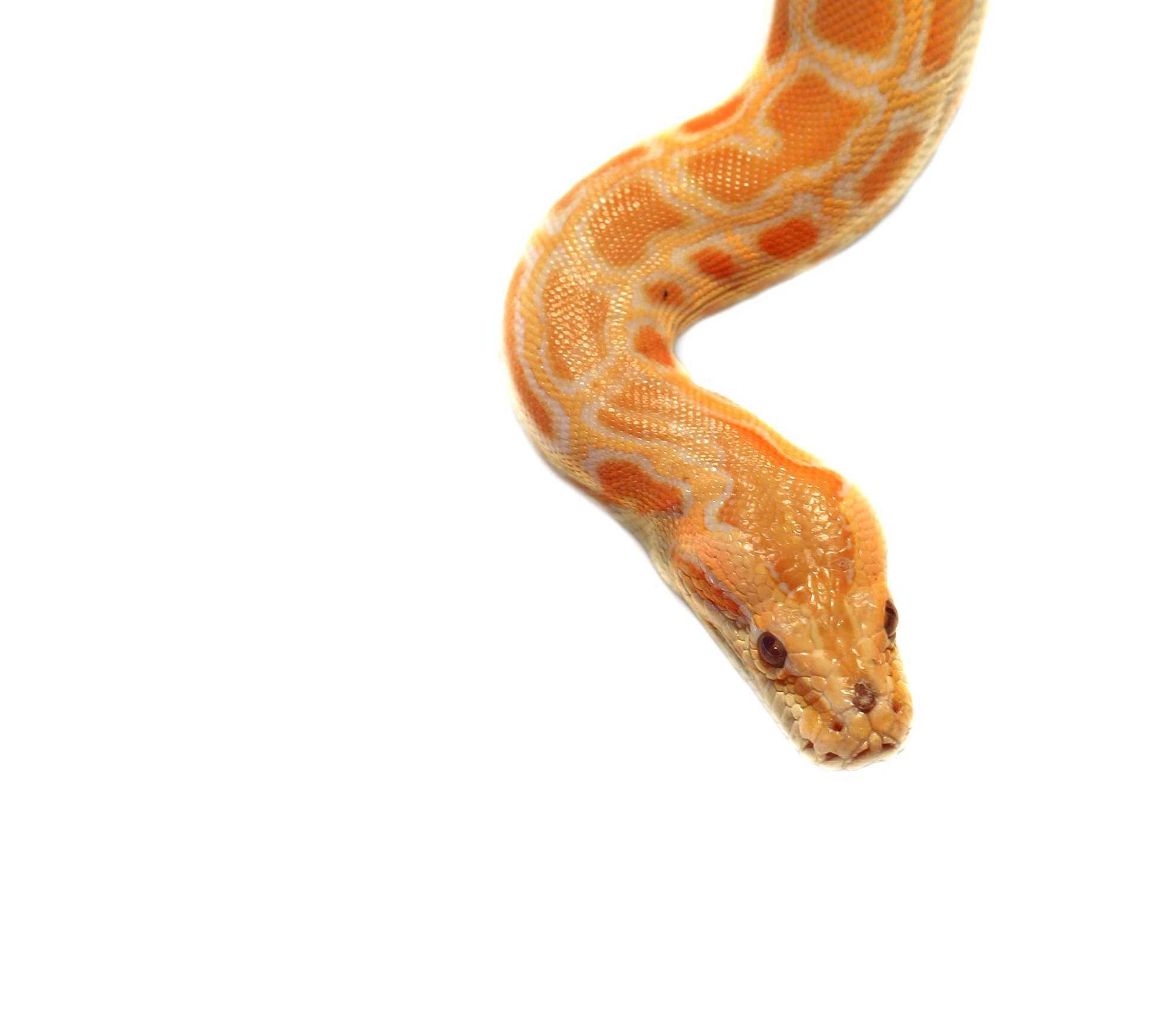 Pet Snake Care Reptile Care Pet Care Pet Talk