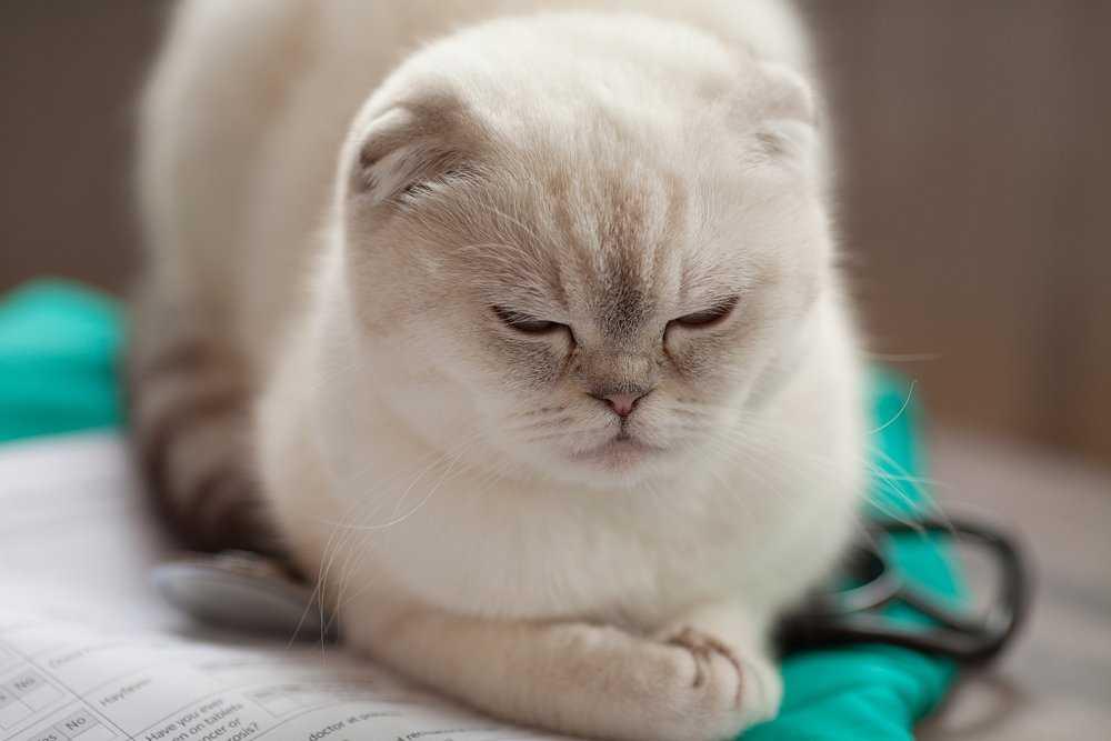Understanding Cat Neutering Castration Pets At Home