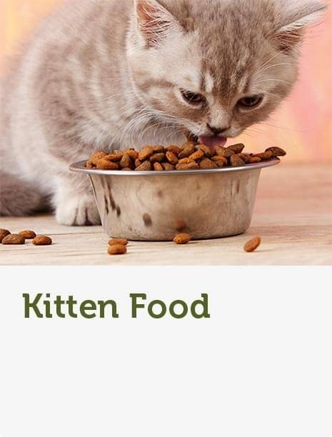 Cat Products | Food, Toys, Collars & Care | Pets At Home
