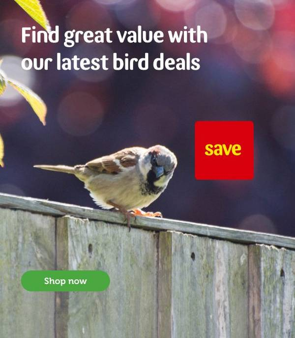 Pet Bird & Wildlife Supplies   Food & Homes   Pets at Home