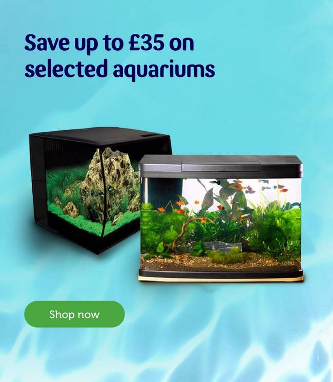 Fish Tanks & Supplies   Filters & Foods   Pets at Home