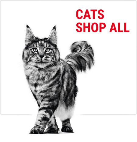 Royal Canin Buy Royal Canin Pet Food At Pets At Home