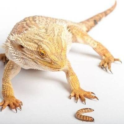 Reptile Products for Sale  Pets at Home