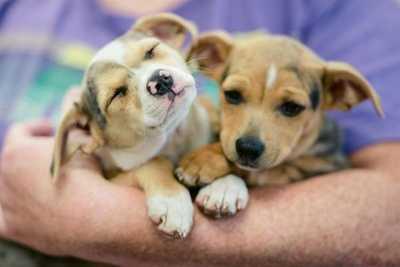 Puppy neutering