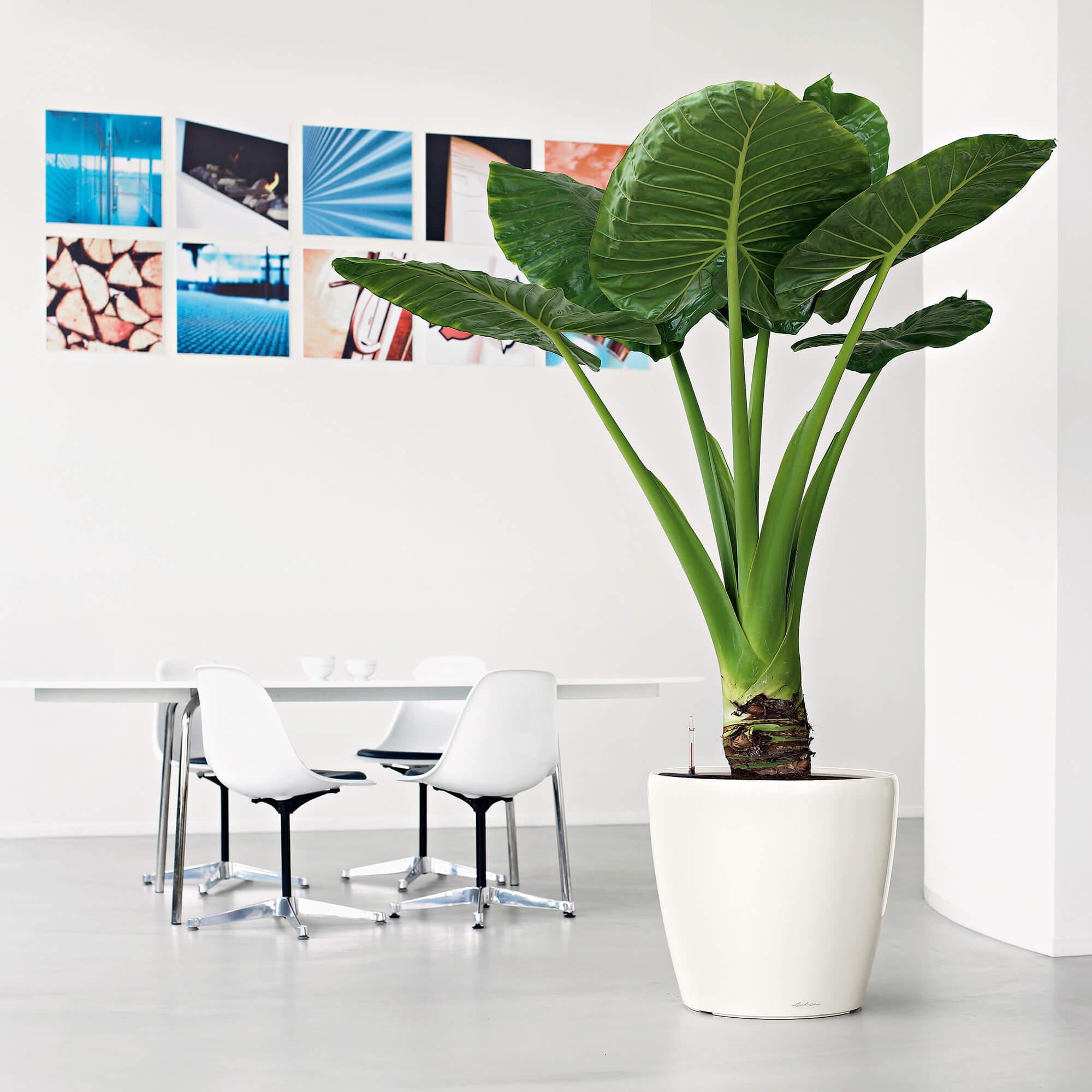 CLASSICO LS 50 white high-gloss - Image 5