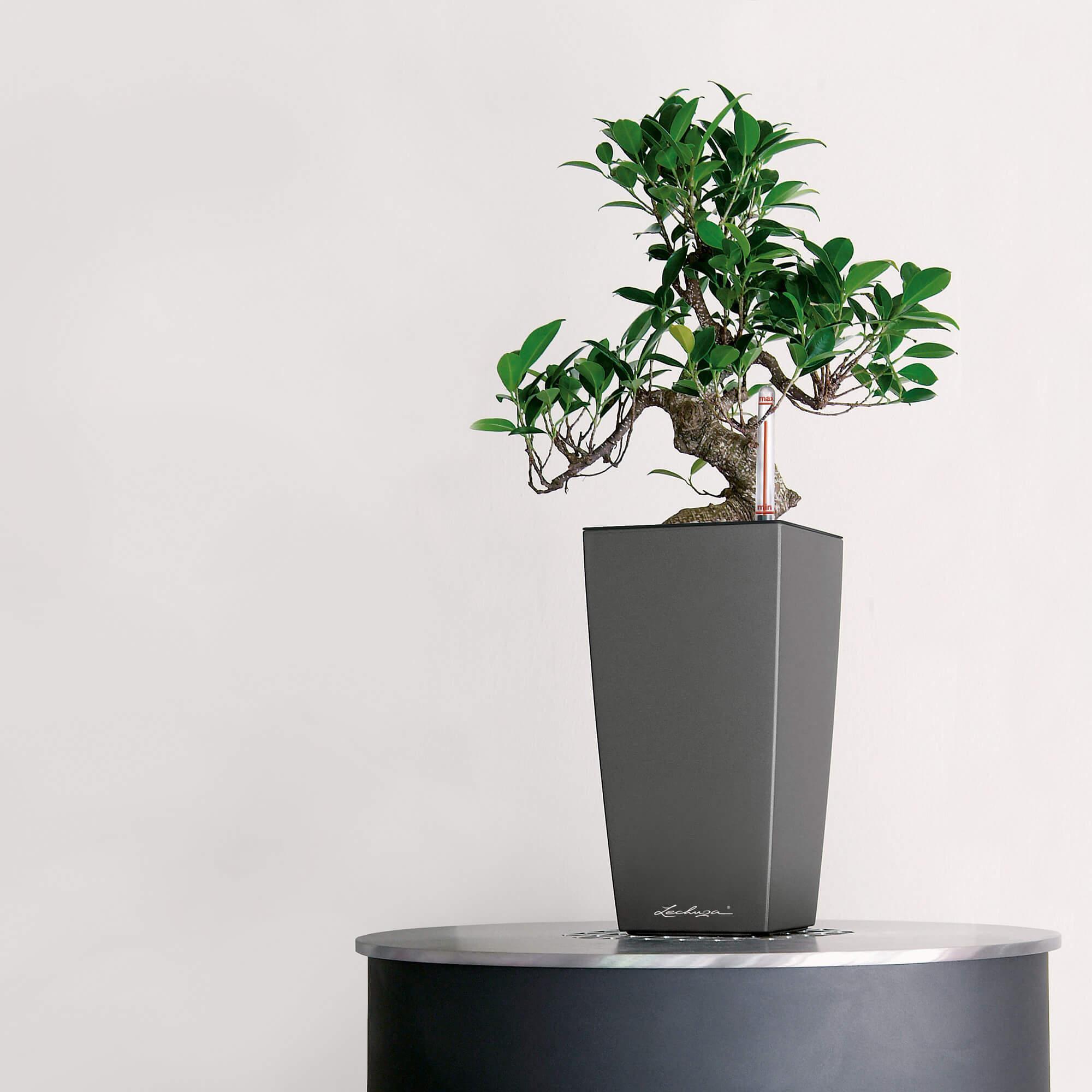 MAXI-CUBI серо-коричневый блестящий - изображение 5