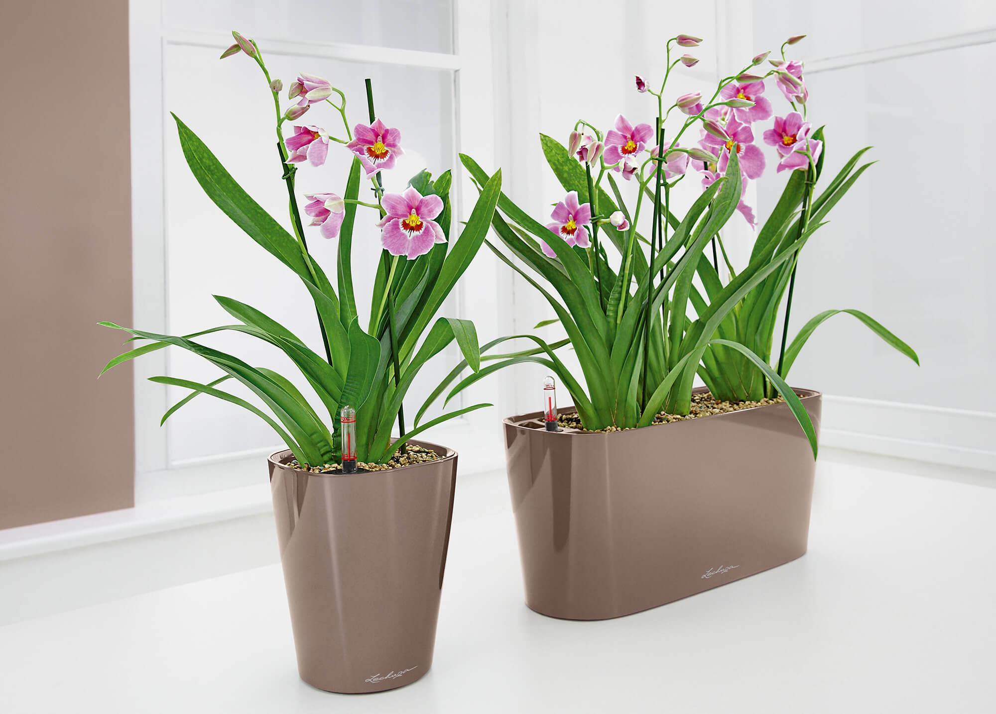 Orquideas Blancas Cuidados. Stunning Orquideas Blancas Cuidados With ...