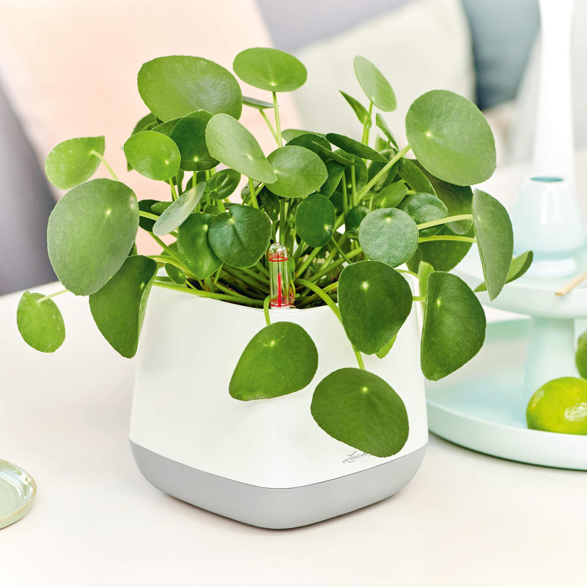 YULA planter white/gray semi-gloss - Image 6