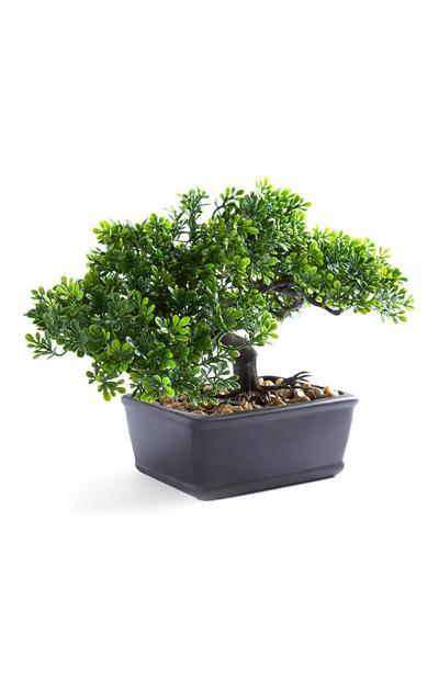 Large Bonsai Tree